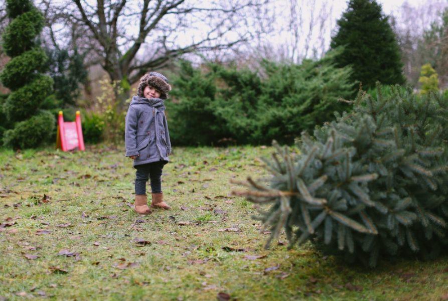 Wszystkiego Co Najlepsze od Wszystkich Bubków Na Święta!!!